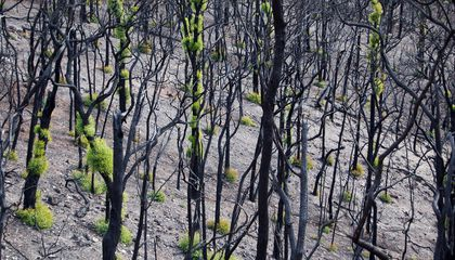 How Australia's Wilderness Is Recovering From Wildfires