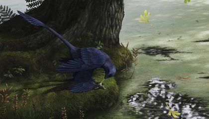Dinosaurs Evolved Flight at Least Three Times