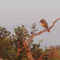 A bird on a tree in South Africa
