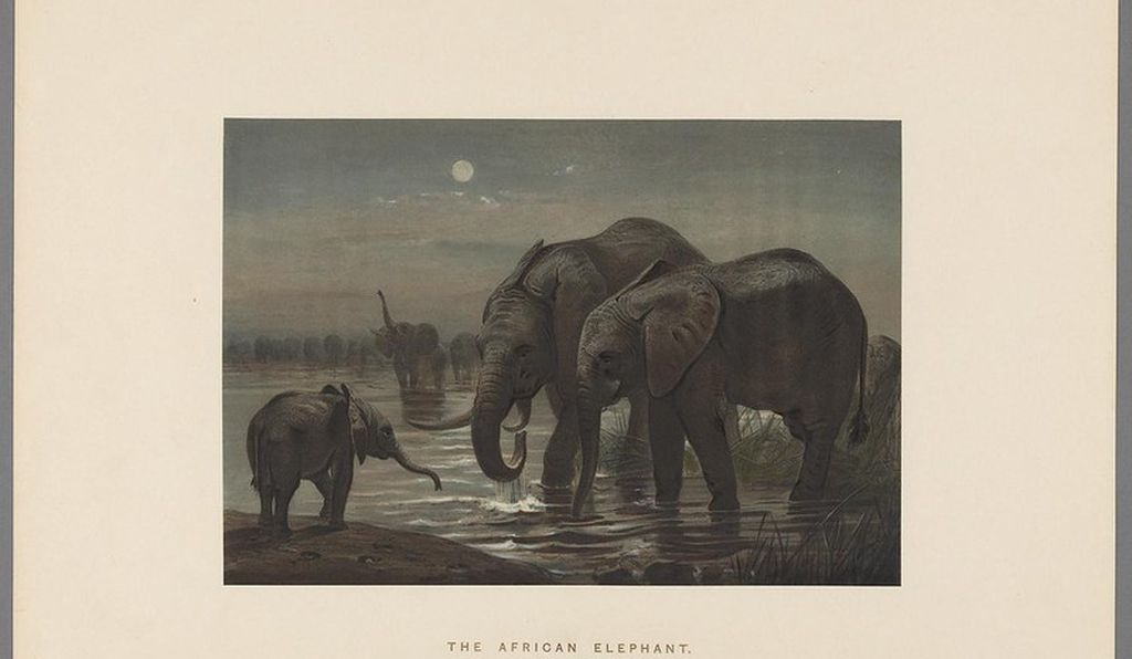 "Joseph Wolf's <em>African Elephants</em> reflects a Victorian family structure rather than actual wild elephant behavior. ""><br /> </noscript><br /> </span><figcaption class="