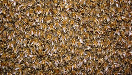 Bee Hive Democracy Isn't So Different From Human Democracy