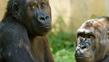 The List: 5 Reasons Why We Should Worry About an Ape Revolution