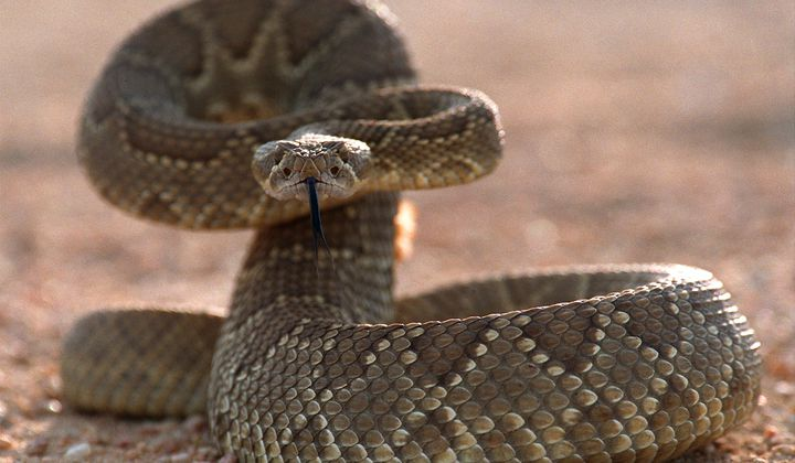 14 Fun Facts About Frightening Animals