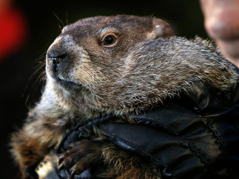 a short history of groundhog day smart news smithsonian