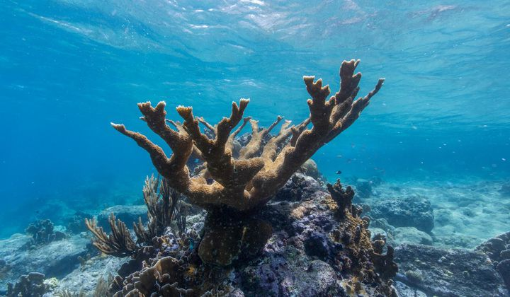 Helping Corals Fight Back