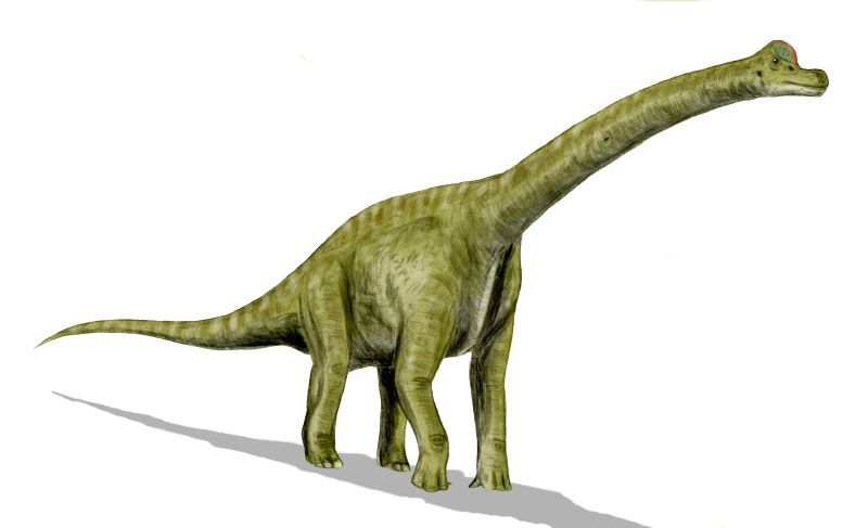 A green brachiosaurus is pictured