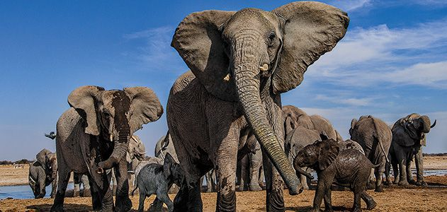 Mean-Girls-elephants-at-Etosha-National-Park-631.jpg