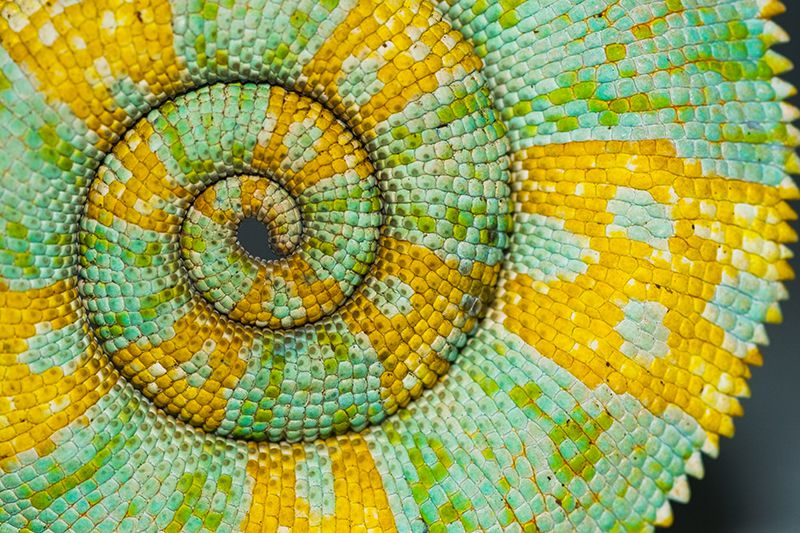 The Science Behind Nature's Patterns | Science | Smithsonian Magazine