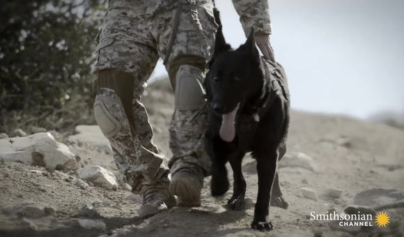 Preview thumbnail for video'This SEAL dog prevented a deadly disaster