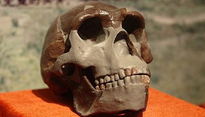 The Mystery of the Missing Hominid Fossils
