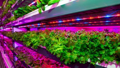 Dubai Will Be Home To the World's Biggest Vertical Farm