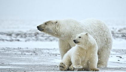 Toxic Chemicals Banned 20 Years Ago Finally Disappearing From Arctic Wildlife