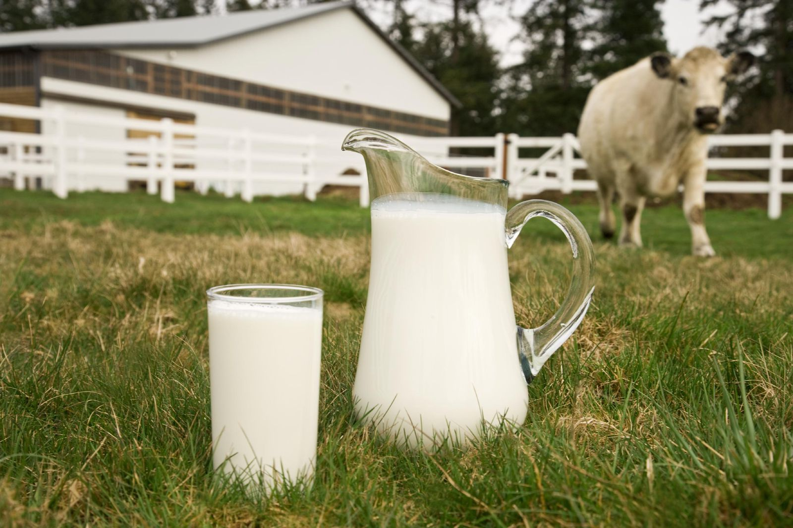 Seven of the Most Extreme Milks in the Animal Kingdom
