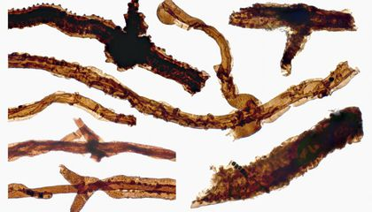 440-Million-Year-Old Fossilized Fungi May Be The Oldest Land Dwellers Yet Discovered