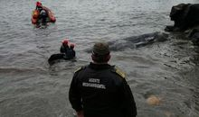 Dead Sperm Whale Had 64 Pounds of Trash in Its Digestive System