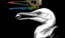 3-D Scans of Fossil Beaks Show How Modern Birds Came to Be