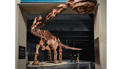 Here's How You Squeeze the Biggest Dinosaur Into a New York City Museum