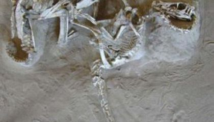 """Did """"Raptor"""" Killing Claws Evolve For Climbing?"""