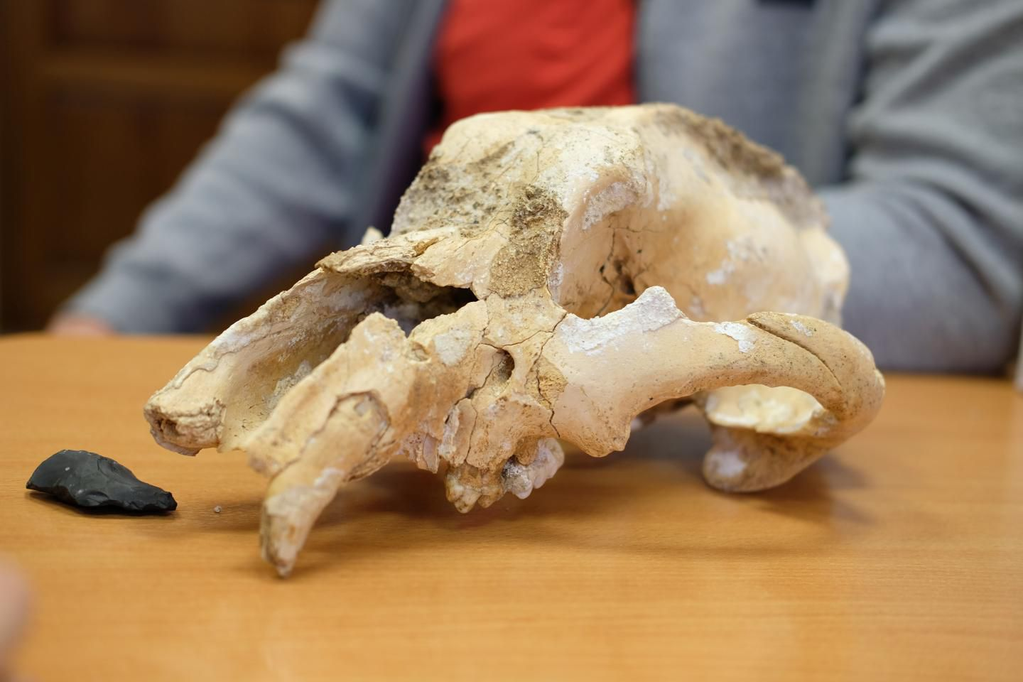 This 35,000-Year-Old Skull Could Be the First Evidence of Humans Hunting Small Cave Bears