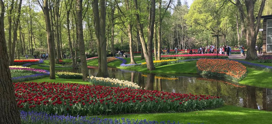 Virtual Journey: Waterways of Holland and Belgium Meander Keukenhof Gardens and celebrate Spring in Holland on this virtual tour.