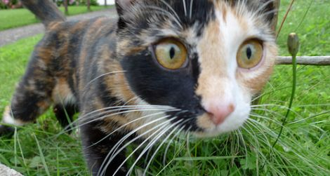 """Defying its reputation as aloof, this tortoiseshell cat was labelled """"the friendliest cat we met"""""""