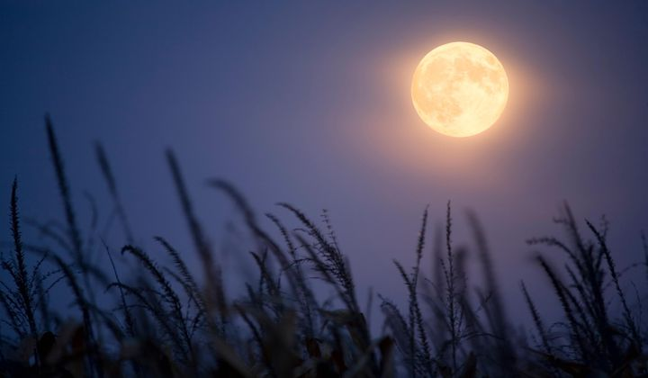 Rare Harvest 'Micromoon' to Appear on Friday 13th