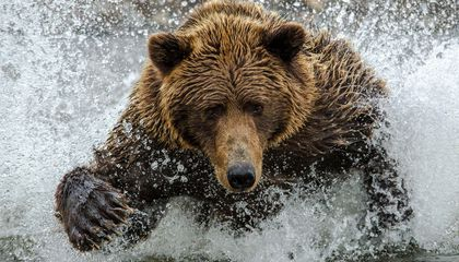 Where and How to (Safely) Bear Watch in Alaska