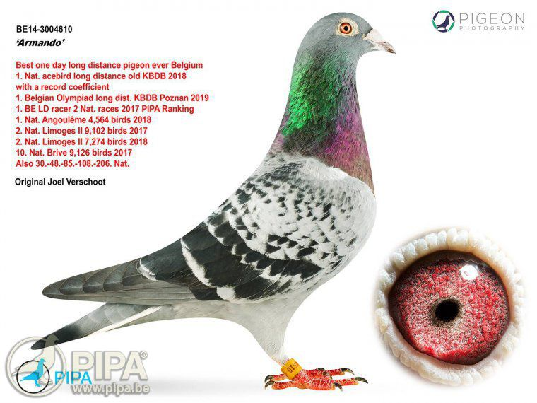 Why This Pretty Little Pigeon is Worth $1.4 Million