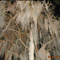 Spanish moss taken in Savannah Ga. close to Halloween 2011 while on a haunted Savannah tour Nikon Cool pix L 24