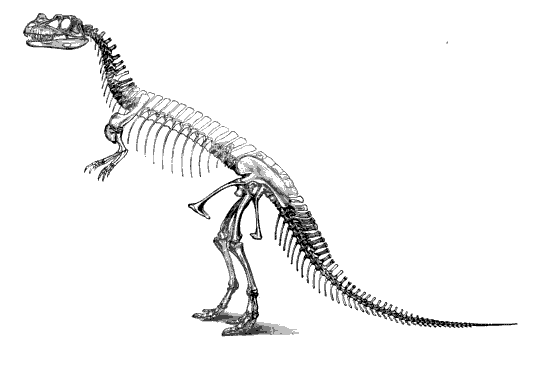 20110520083144ceratosaurus-skeleton-marsh.jpg