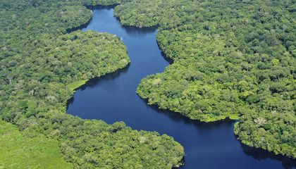 Brazil Begins Effort to Plant 73 Million Trees in the Amazon