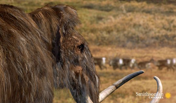 Preview thumbnail for video'What Really Killed Off the Woolly Mammoth?