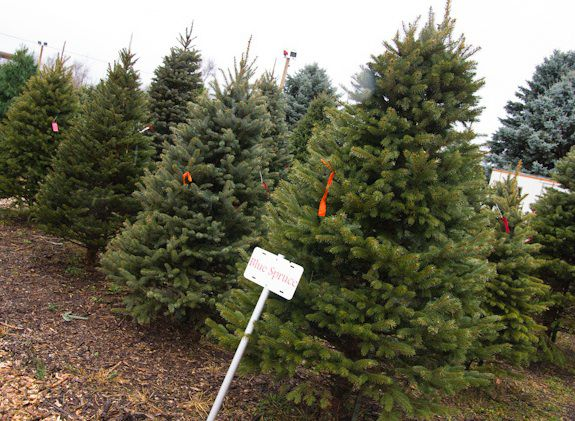 Your Christmas Tree Helps Fight Climate
