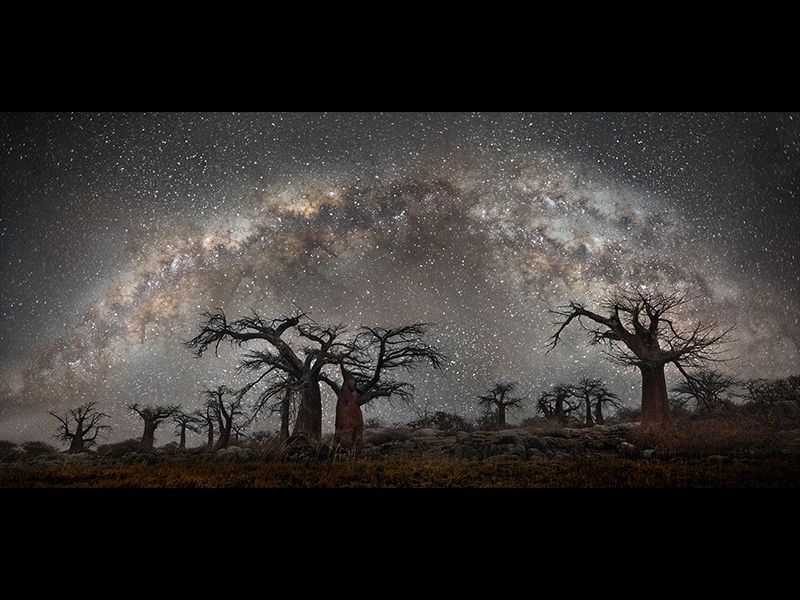 Stunning Photos of Africa's Oldest Trees, Framed by
