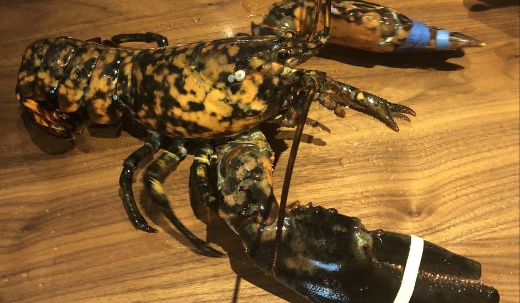 Freckles was found at a Red Lobster restaurant on April 25