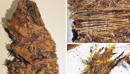These Iron Age Swedish Warriors Were Laid to Rest on Luxurious Feather Bedding