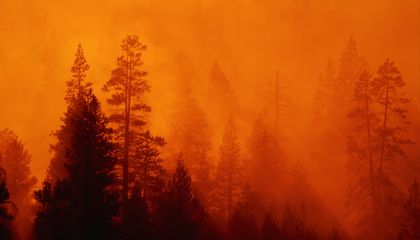 North America's Trees Create Some of the World's Hottest Forest Fires