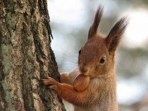 20110520104015squirrel-300x225.jpg