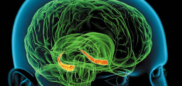 How our brains make memories science smithsonian memory hippocampus brain ccuart Images