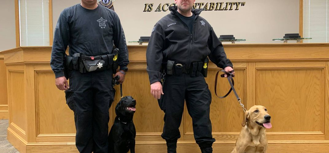 Caption: Massachusetts Is First State to Use Covid K9 Unit