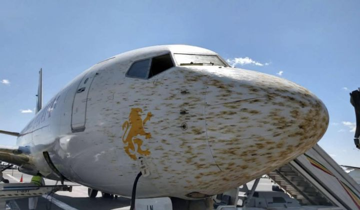 At Some Airports, a Plague of Locusts is Real