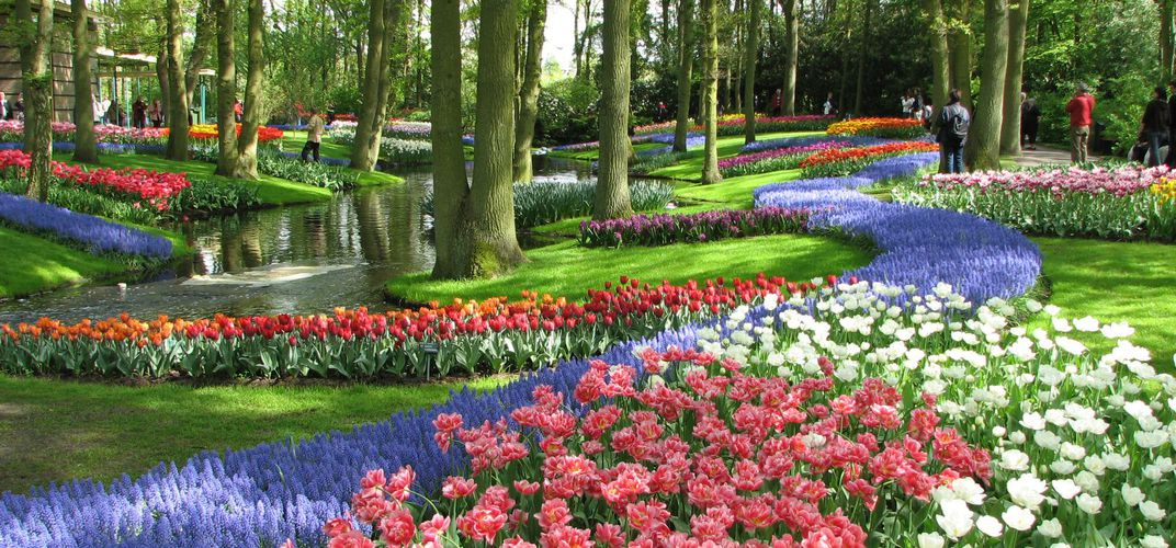 Tulips in the Keukenhof