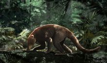 Fossil Site Reveals How Mammals Thrived After the Death of the Dinosaurs