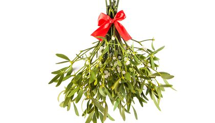 The Enduring Romance of Mistletoe, a Parasite Named After Bird Poop