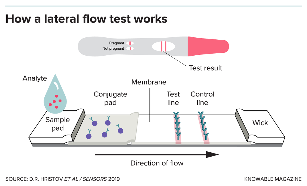 G-lateral-flow-test-alt.png