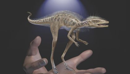 Giant Dinosaurs and Pterosaurs May Have Evolved From This Four-Inch-Tall Reptile