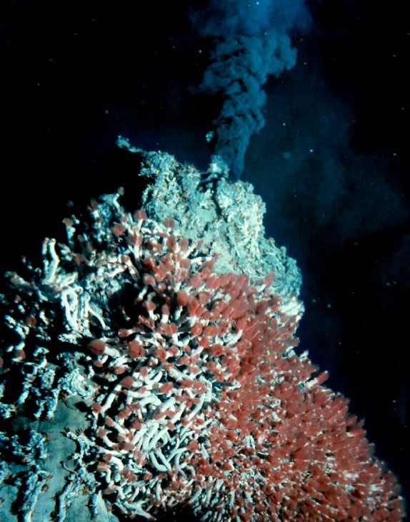 A hydrothermal vent
