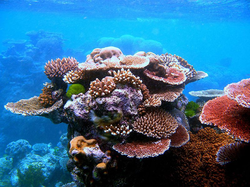 a return to the reefs science smithsonian