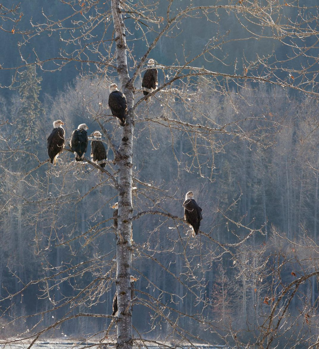 eagles basking in the sun
