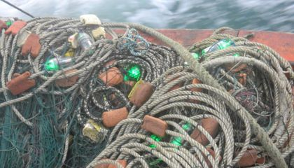 These Light-Up Fishing Nets Could Save Sea Turtles
